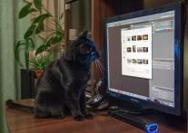 Фотошоп для чайников и  кошек